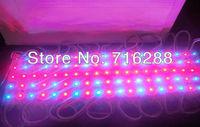 New 1W red and blue light LED Grow light for flowering plant spot light
