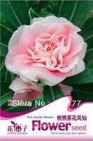 Free shipping 150pcs Impatiens balsamina  flower seeds,,Hydrangea plant seeds,original pack seeds