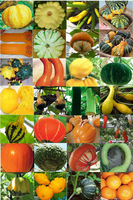 28 varieties of pumpkin seeds,Giant Pumpkins UFO melon Banana melon More than 200 seeds