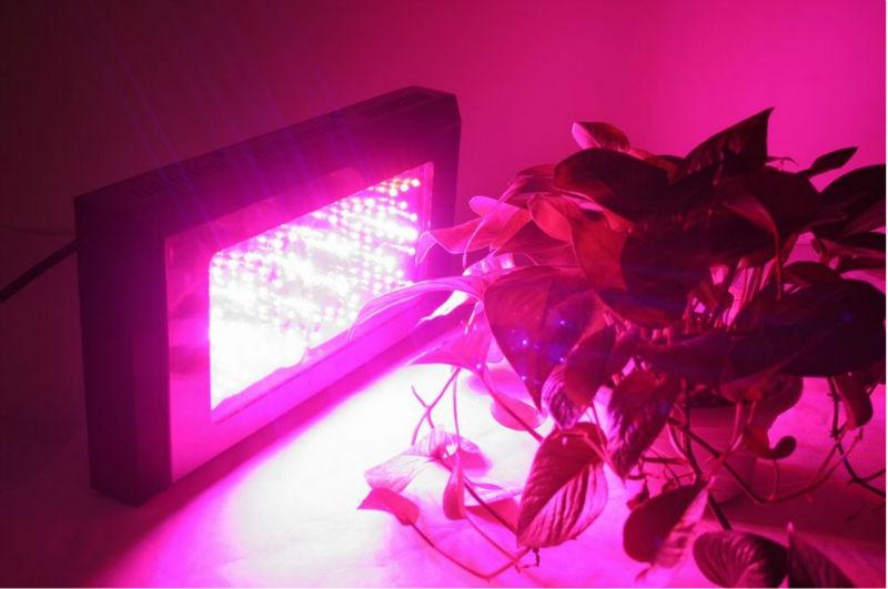 venda quente hidro blackstar 180w led cresce a luz, 60x3w planta levou crescer lâmpada para cultivo interior jardim, super-safra(China (Mainland))