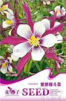 Aquilegia high quality flower bonsai seeds cut flower bed new arrival 50seeds a190