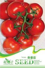 popular seeds tomato