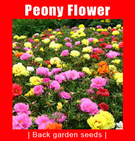 Free shipping, 1000 seeds, Chinese Peony Flower Seeds,
