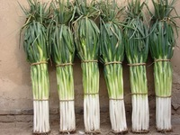 Free Shipping 1 Original packaging giant scallion Green Chinese onion seeds * 5g 500+pcs per Bag height 140-160cm scallion seeds