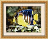 FREE SHIPPING  Diy rhinestone diamond painting home decoration gift round diamond painting tropical fish Tropical fish