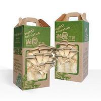 Free shipping,New arrival desktop pleurotus ostreatus mushroom plants magic
