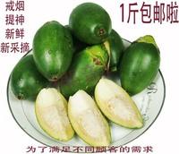 1 fresh betel nut areaways in bulk areaways