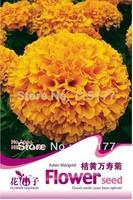 Free shipping 150pcs Tagetes erecta flower seeds,,Hydrangea plant seeds,original pack seeds