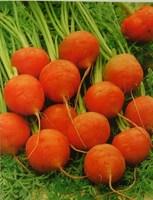 Mini carrot seed small bonsai nutrition 50pcs/bag