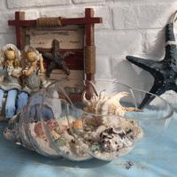 Home decoration glass bottle natural sea shell kit decoration