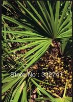25% Fatty Acids Pure natural Saw palmetto P.E.