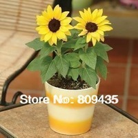 Free shipping Wholesale 60 pcs sunflower Seeds house plants seeds