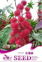 Free shipping 150 Ricinus communis seeds,,Hydrangea plant seeds,original pack seeds