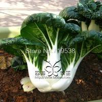 balcony bonsai milk cabbage 50 pcs Vegetable seeds