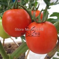 balcony bonsai fruit red tomato 50   pcs Vegetable seeds