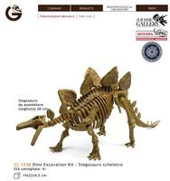 Geoworld ! cytoskeleton model - - model