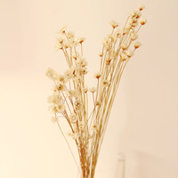Fresh small daisy dried flowers mikie decoration props home soft zakka