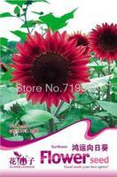 Fiber sunflower high quality bonsai seeds 15seeds a108