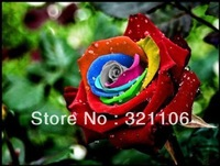 Mystic Rainbow Rose Bush Flower Seeds 200 Stratisfied Seeds Free Shipping