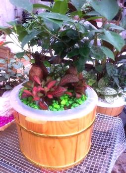 Original design combination bonsai decoration radiation-resistant formaldehyde
