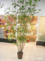 Beautiful bamboos - artificial bamboo - bambinos - - zizhu - steadily high