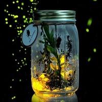 Aesthetic romantic tank incredible light bottle sun jar luminous tank moonlight cans fireflies