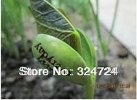 Hot Sale!100pcs/lot  Magic Growing Message Beans Seeds Magic Bean White English Magic Bean Bonsai Green Home Decoration