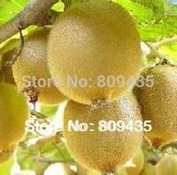 Free Shipping 300 pcs The king of fruits seeds Kiwi fruit tree seeds