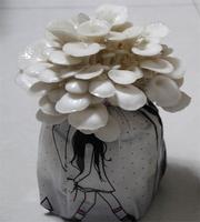 Mushroom vegetable seeds plants plant bonsai high temperature pleurotus ostreatus bag 1kg