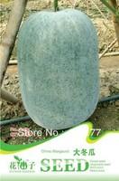 Free shipping 150 Benincasa hispide(Thunb.)Cogn seeds,,Hydrangea plant seeds,original pack seeds