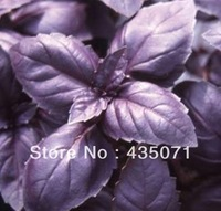 Heirloom 1000 Seeds / bag Sweet Holy Basil Ocimum basilicum Tulsi Herb Flower Fresh Bulk Seeds