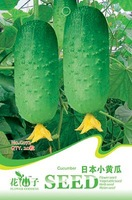 1 Pack 20 Seed Japan Cucumber Seeds Cucumis Sativus Organic Vegetable Hot C072