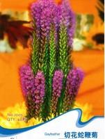 1 Pack 40 Seed Gayfeather Seeds Liatris Spicata Dark Purple Flower Seed J005