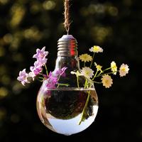Vintage light bulb vase hydroponic plants glass vase hanging buld vases