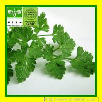 Celery Extract/Apium extract/ Apigenin/butylphthalide 98%