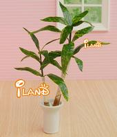 iland 1/12 Dollhouse Miniature Potted Brazilwood TREE Plant W/ Pot OP006