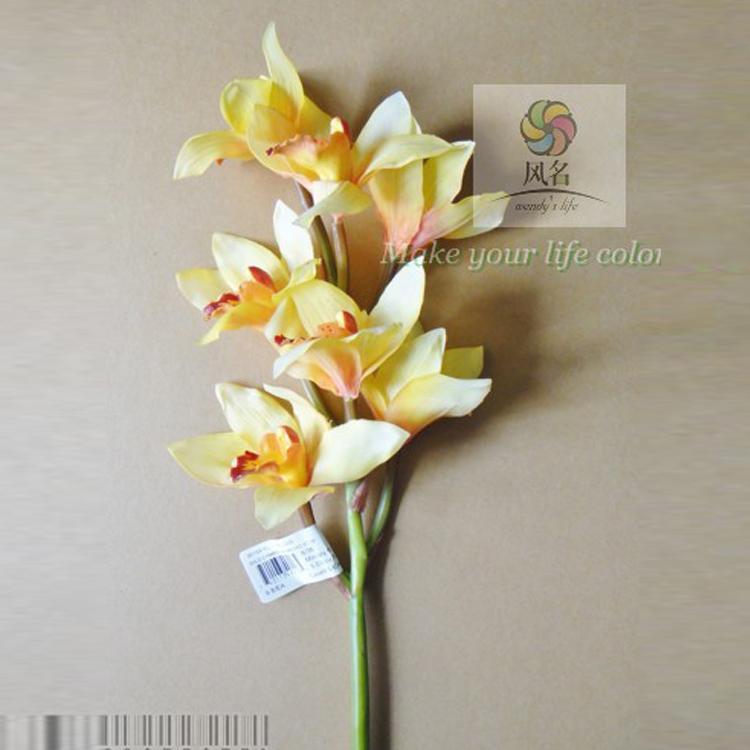 Cymbidium Orchids Retail Orchid Cymbidium Orchid