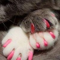 Free Shipping 5000pcs/lot Pet cat finger dog finger pet floor  Pet Dog & Cat Nail Caps Claw Control Pet Cat Soft Paw S ,M,L,XL