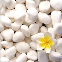 White small stones white stone hydroponic plants indoor bonsai plant gardening supplies decoration