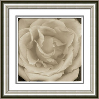 Handpainted Decorate PS Frame SprayWhite Red Rose Flower Painting Drawing Paint