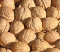 Free Shipping Brown Thin Shell Walnut Nuts Seeds, Nutrient Nuts Seeds, Fresh Seeds (1 Seeds) SD0546