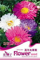 1 Pack 250 Seed Youth-and-old-age Zinnia Elegans Purple Flower Seeds Free Shipping