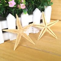Min Order $20 Mix Order  Home decoration Natural Sea Star 3 - 8CM Starfish Children Gifts Household Adornment Wall Platform