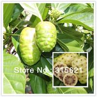 NONI Seeds Delicious Fruit Morinda Citrifolia Tree Seed  5pcs  Free shipping
