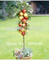 Free Shipping 35pcs apple bonsai seeds DIY Gardening fruit seeds