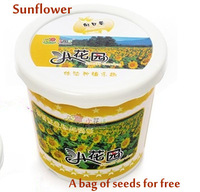 Mini Bonsai sunflowers 3pieces a lot with one bag of seeds as a gift ,potted flowers freeshipping
