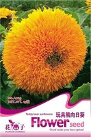1 ORIGINAL PACKS 60 SEEDS TEDDY BEAR  SUNFLOWERS * FLOWER SEEDS * PLUS MYSTERIOUS GIFT!!!
