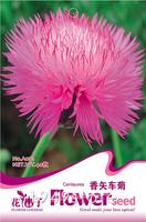 1Bag Cornflower Seed 150 Incense Petals Flowers Seeds Fragmented Plume Centaurea