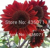 Heirloom 100 Seeds / bag Helianthus Sunflower Jerusalem artichoke Sunroot Red Flower Bulk Seeds
