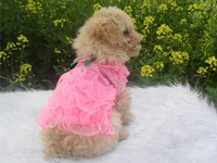 Lace sweet bust skirt Lace Summer wear Dress princess cat pet dog Teddy clothing for Dogs Hot sell Free shipping